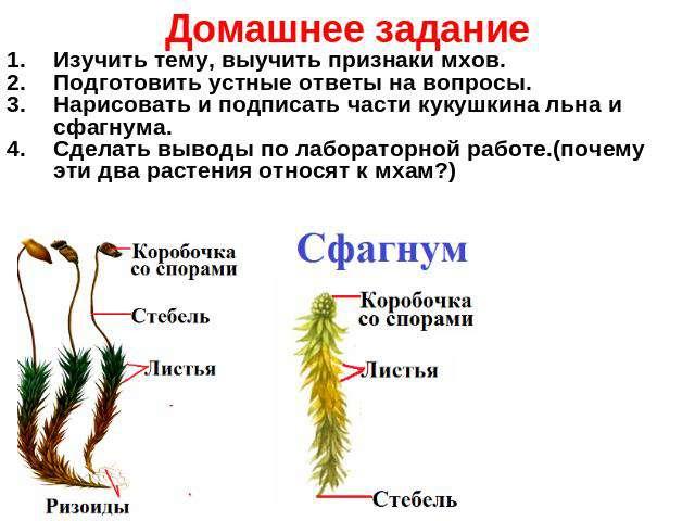 Презентация на тему высшие растения