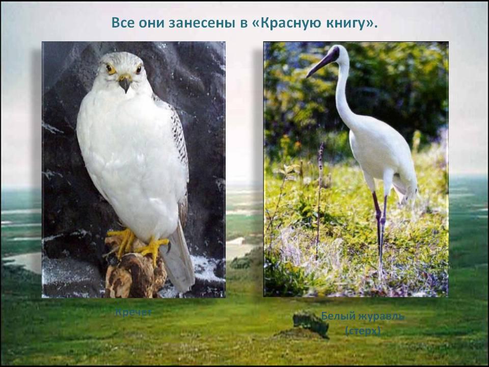 мир природы конспекты уроков