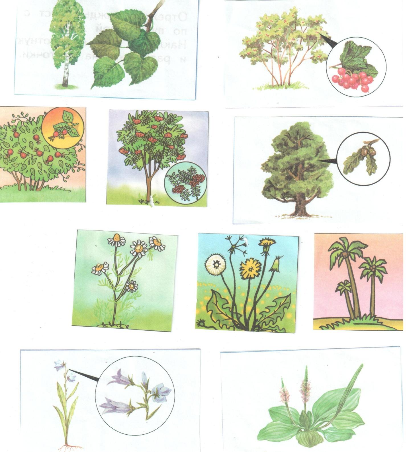 Группы картинок растения