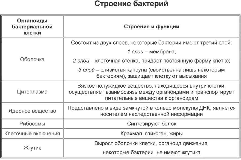 Схема строения бактерии