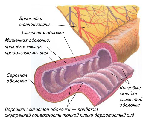 Острая сердечная недостаточность при циррозе печени